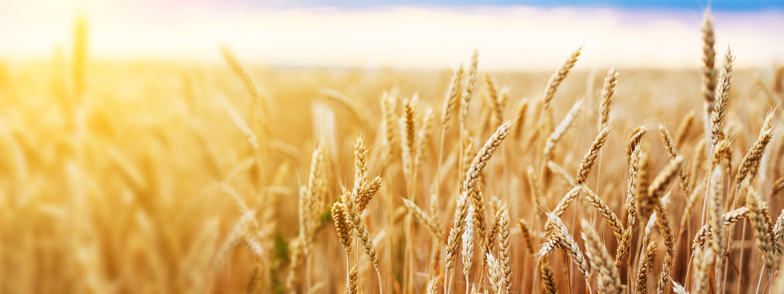 Shavuot: Let kindness be our guide